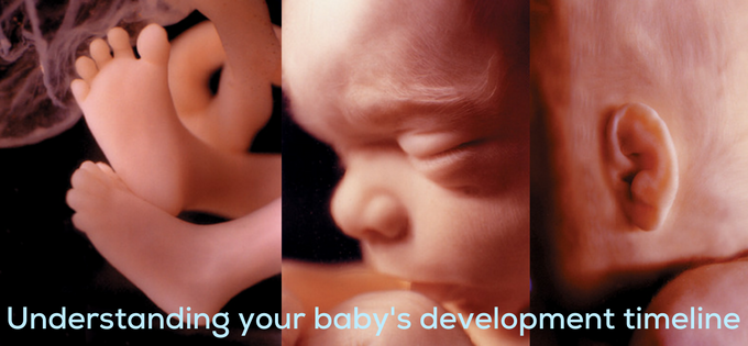 Ground Zero: Understanding Your Baby's Development